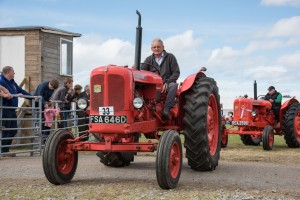 VINTAGE TRACTORS COMING INTO THE MAIN SHOW RING. No 33 Robert Duguid IN HIS Nuffield tractor post 1960 classic  6748